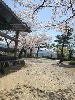 空,花,春,桜,庭,屋外