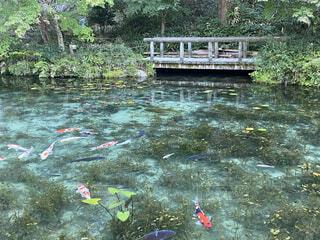 名もなき池の写真・画像素材[4196082]