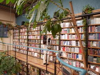 メキシコシティのインスタ映えスポット 図書館 + カフェ = カフェブレリアの写真・画像素材[4193277]