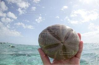 メキシコ カンクン 青いカリブ海 シェルの写真・画像素材[4196436]