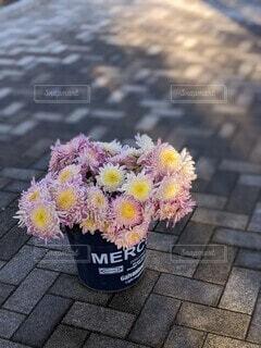 菊の花束の写真・画像素材[4199233]