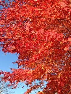大きな木の写真・画像素材[4224637]