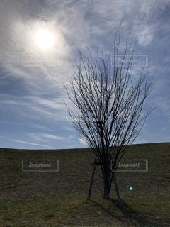 もぅ春は目の前☀️の写真・画像素材[4222666]