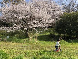 桜を感じながらの写真・画像素材[4313653]