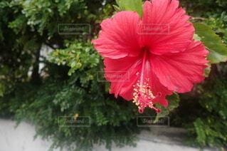 島の花の写真・画像素材[4195778]