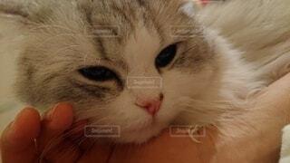 猫のクローズアップの写真・画像素材[4204715]