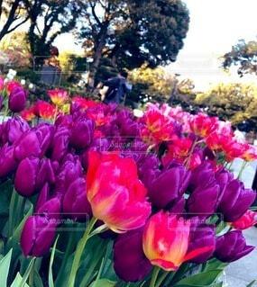 花,屋外,紫,草木