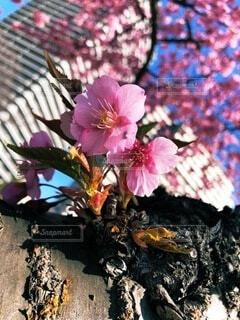 花,春,草木,ブロッサム