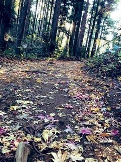 秋,屋外,葉,地面