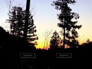 自然,空,屋外,夕暮れ,シルエット,樹木,草木,クリスマス ツリー