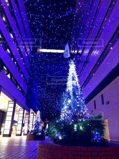 建物,屋内,紫,樹木,クリスマス,クリスマス ツリー