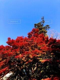 空,秋,屋外,樹木,草木