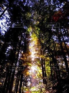 自然,空,秋,屋外,樹木,草木
