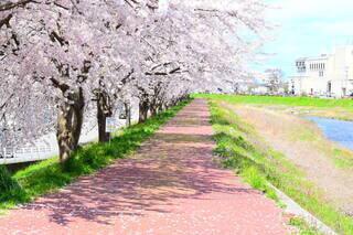 花,春,屋外,草,樹木,地面,ブロッサム,パス