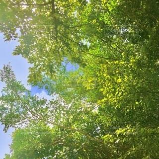 お散歩日和の写真・画像素材[4204791]