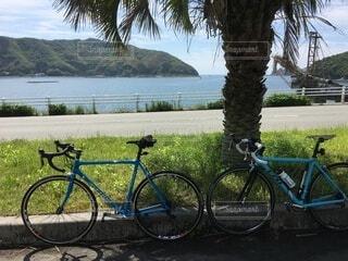 空,公園,夏,自転車,屋外,湖,南国,駐車場,ベンチ,水面,草,樹木,休憩,ヤシの木,ハワイアン,ロードバイク,眺め,ホイール,スポーツ用品,自転車のホイール