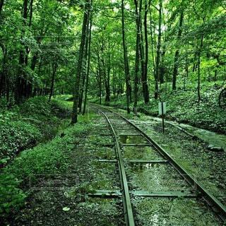 森の中の廃線の写真・画像素材[4202059]