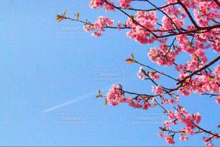 空の写真・画像素材[237811]