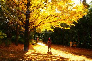 公園の写真・画像素材[244558]