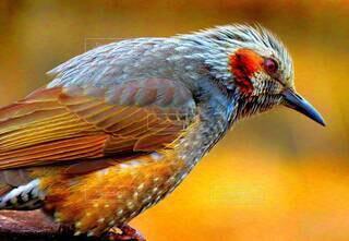 動物,鳥,羽,野鳥,接写,ヒヨドリ,ひよどり