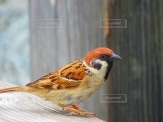 動物,鳥,木,屋外,立つ,すずめ,雀,スズメ