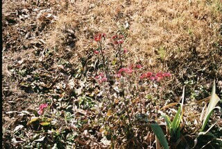 花,屋外,草