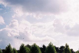 自然の写真・画像素材[235057]