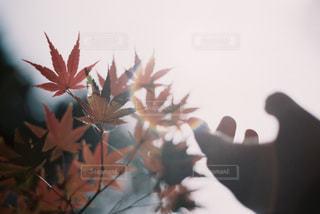季節の写真・画像素材[851155]