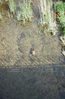 土の中に立っている鳥の写真・画像素材[1205539]