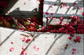 近くの花のアップの写真・画像素材[1205549]
