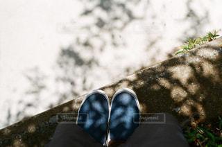 木漏れ日の写真・画像素材[1261302]