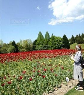 花畑の側に立つ女性の写真・画像素材[4208811]