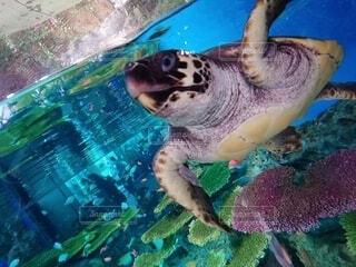動物,魚,水族館,葉,泳ぐ,水中,カメ,ウミガメ,爬虫類