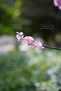 花,梅,草木