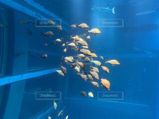魚,水族館,水面,葉,サメ,ダイビング,海洋無脊椎動物,海洋生物学