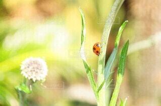 花のクローズアップの写真・画像素材[4246260]
