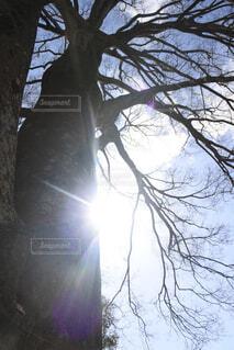 空,屋外,太陽,晴れ,枝,霧,樹木,大きな木,草木