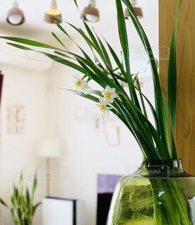 花,屋内,緑,花瓶,植木鉢,水仙,観葉植物,草木