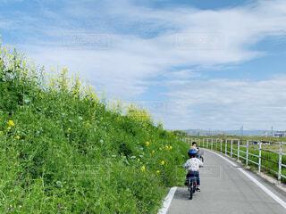 春の自転車道で自転車に乗る子供たちの写真・画像素材[4305620]