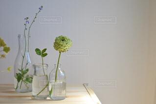 木の台に並ぶ小さな花瓶とグリーンたちの写真・画像素材[4314975]