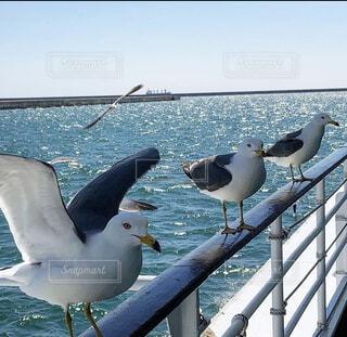 いわき観光船に乗りかもめに餌やりすでに待っていた😅の写真・画像素材[4262490]