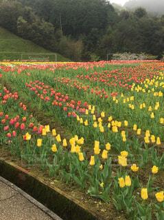 花,春,屋外,草,草木