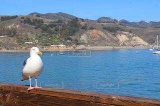 空,鳥,屋外,湖,ビーチ,水面,山,カモメ