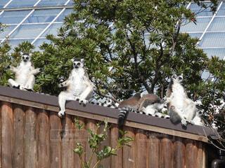 動物,鳥,屋外,樹木,フェンス,像,動物園,木目,フクロウ
