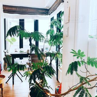 カフェ,屋内,家,テーブル,植木鉢,リラックス,デザイン,観葉植物,おうちカフェ,ドリンク,おうち,ライフスタイル,草木,おうち時間,ステイホーム