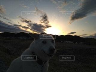 犬,空,動物,屋外,夕焼け,あくび