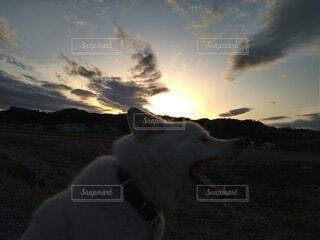 犬,自然,空,動物,屋外,雲,散歩,夕暮れ時