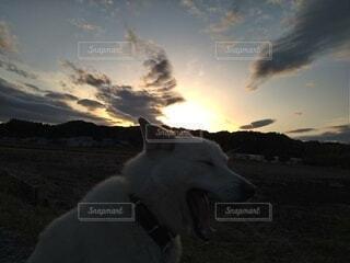 犬,空,動物,屋外,散歩,あくび,夕暮れ時