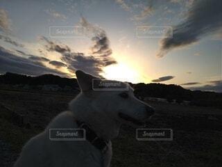 犬,空,夕日,動物,屋外,散歩