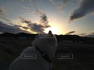 犬,自然,風景,空,動物,屋外,雲,夕暮れ,散歩